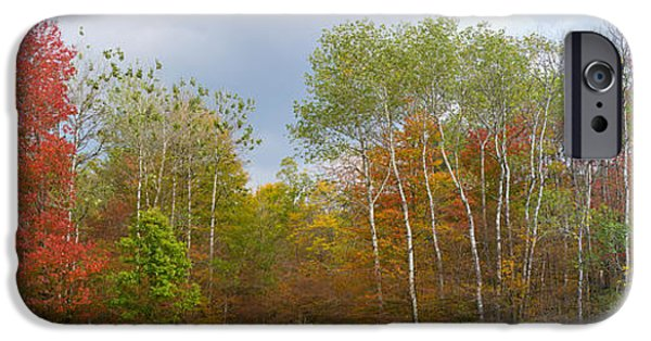 States iPhone Cases - Trees In A Forest, Allegany State Park iPhone Case by Panoramic Images