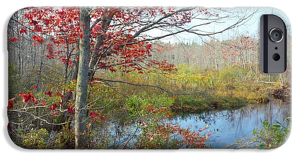 Lincoln iPhone Cases - Trees In A Forest, Damariscotta iPhone Case by Panoramic Images