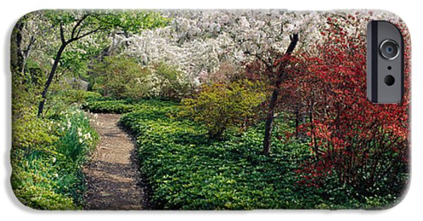 Botanical iPhone Cases - Trees In A Garden, Garden Of Eden iPhone Case by Panoramic Images