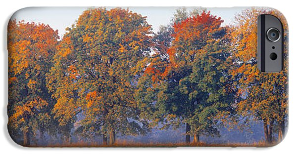 Garden Scene iPhone Cases - Trees In A Garden, South Bohemia, Czech iPhone Case by Panoramic Images