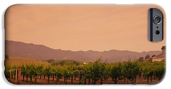 Winery Photography iPhone Cases - Trees In A Vineyards, Napa Valley iPhone Case by Panoramic Images
