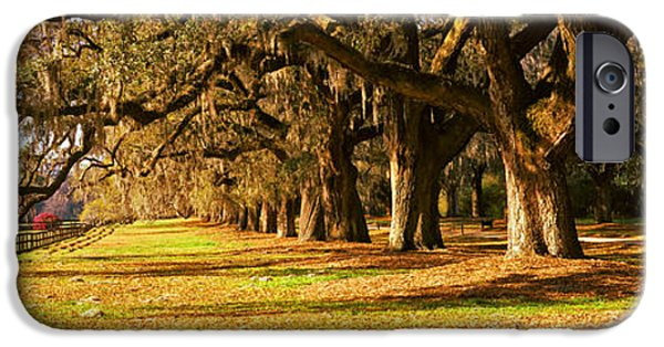 Garden Scene iPhone Cases - Trees In Garden, Boone Hall Plantation iPhone Case by Panoramic Images