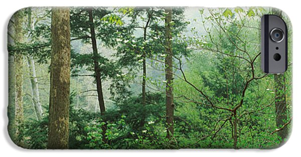 Indiana Springs iPhone Cases - Trees In Spring Forest, Turkey Run iPhone Case by Panoramic Images