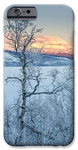 Temperature iPhone Cases - Trees In The Frozen Landscape, Cold iPhone Case by Panoramic Images