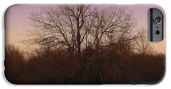 R. Mclellan Photography iPhone Cases - Trees in the Setting Sun iPhone Case by R McLellan