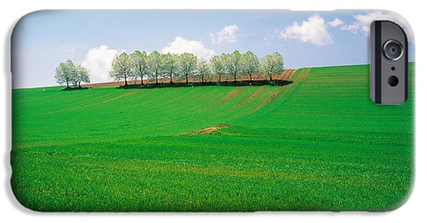 Crops iPhone Cases - Trees Lined In Crop Field With Sky iPhone Case by Panoramic Images