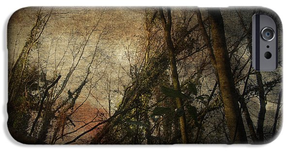 Forest iPhone Cases - Trees No. 5 iPhone Case by Andy Walsh