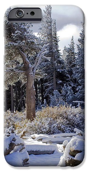 Snow Scene iPhone Cases - Trees of McLeod iPhone Case by Chris Brannen