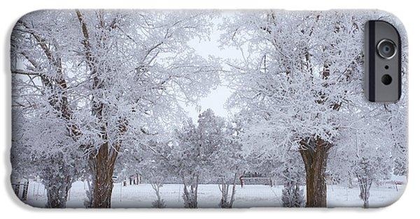 Winter Scene iPhone Cases - Trees of Winter iPhone Case by Darren  White