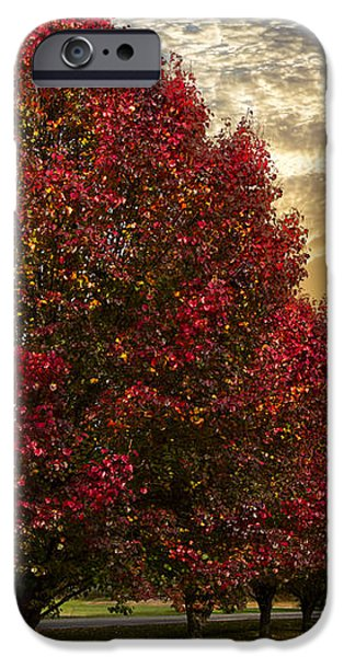 Trees on Fire iPhone Case by Debra and Dave Vanderlaan