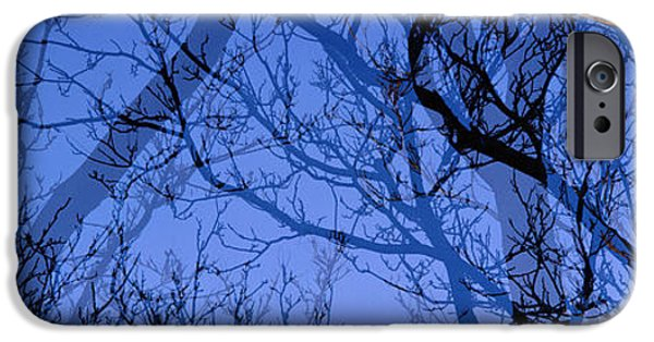 Eerie iPhone Cases - Trees iPhone Case by Panoramic Images
