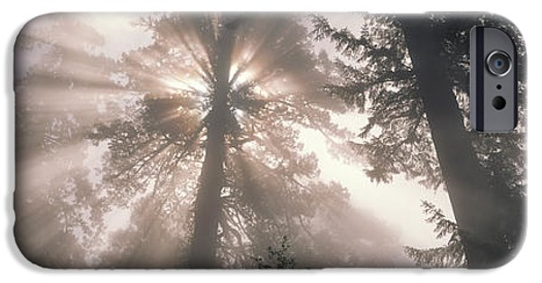 Eerie iPhone Cases - Trees Redwood National Park iPhone Case by Panoramic Images