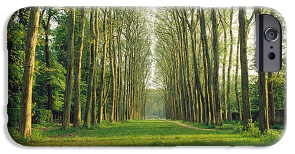Pathway iPhone Cases - Trees Versailles France iPhone Case by Panoramic Images