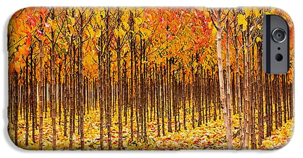 Fall iPhone Cases - Treescape 2 iPhone Case by Rebecca Cozart