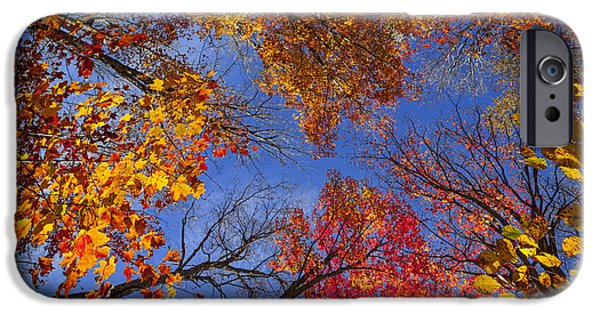 Fall iPhone Cases - Treetops in fall forest iPhone Case by Elena Elisseeva