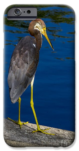 J N Ding Darling National Wildlife Refuge iPhone Cases - Tri-color Heron 1 iPhone Case by Nancy L Marshall