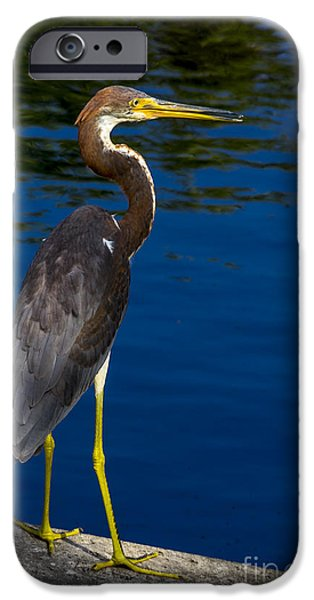 J N Ding Darling National Wildlife Refuge iPhone Cases - Tri-color Heron 2 iPhone Case by Nancy L Marshall