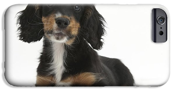 Cute Puppy iPhone Cases - Tricolor Working Cocker Spaniel Puppy iPhone Case by Mark Taylor