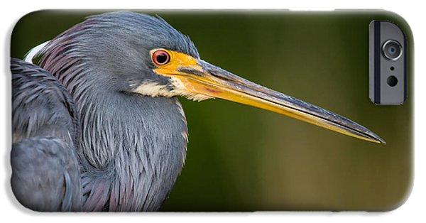 Birds iPhone Cases - Tricolored Heron Closeup iPhone Case by Andres Leon