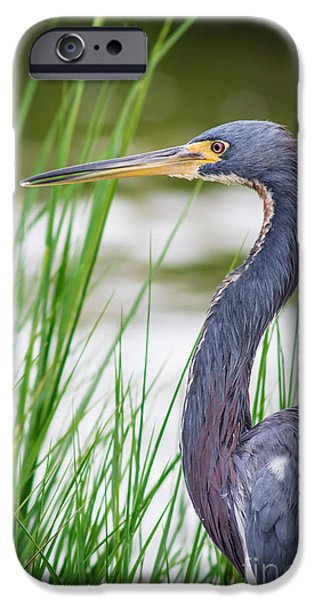 Cabin Window iPhone Cases - Tricolored Heron iPhone Case by Robert Frederick