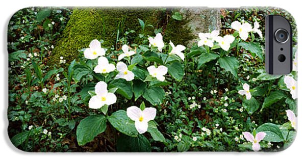 Gatlinburg iPhone Cases - Trillium Wildflowers On Plants, Chimney iPhone Case by Panoramic Images