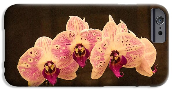 Willow Lake Photographs iPhone Cases - Triple Orchid Arrangement 1 iPhone Case by Douglas Barnett