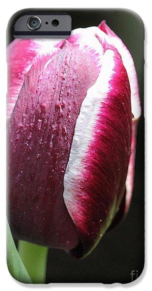 Triumph Tulip named Jackpot iPhone Case by J McCombie