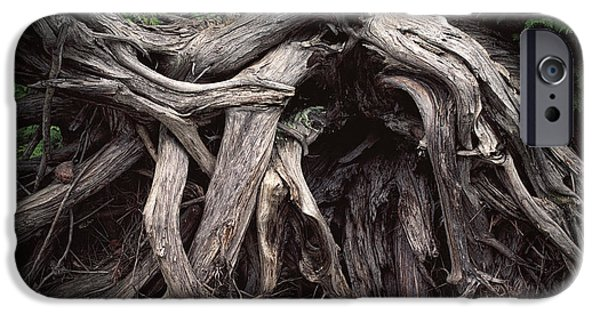 Tree Roots iPhone Cases - TRoots of a Fallen Tree by WaWa Ontario iPhone Case by Randall Nyhof