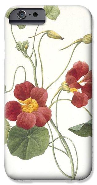 Botanical iPhone Cases - Tropaeolum Majus Garden Nasturtium iPhone Case by Pierre Joseph Redoute