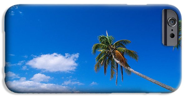 Absence iPhone Cases - Tropical Beach With Coconut Palms iPhone Case by Panoramic Images