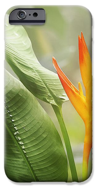 Tropical Flower iPhone Case by Natalie Kinnear