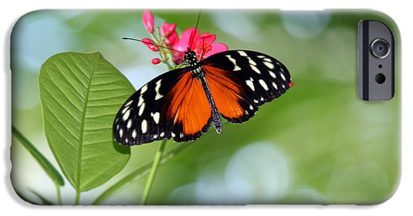 Franklin iPhone Cases - Tropical Hecale Butterfly iPhone Case by Karen Adams