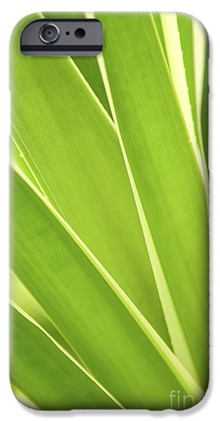 Leaves iPhone Cases - Tropical leaves iPhone Case by Elena Elisseeva