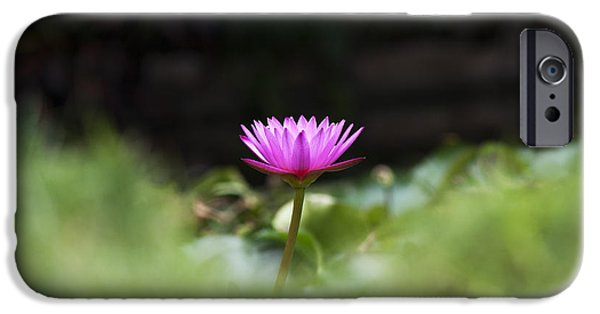 Aquatic Plants iPhone Cases - Tropical Water Lily iPhone Case by Tim Gainey