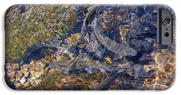 Wild Trout iPhone Cases - Trout Art Prints Creek Lake Trout Photography iPhone Case by Baslee Troutman