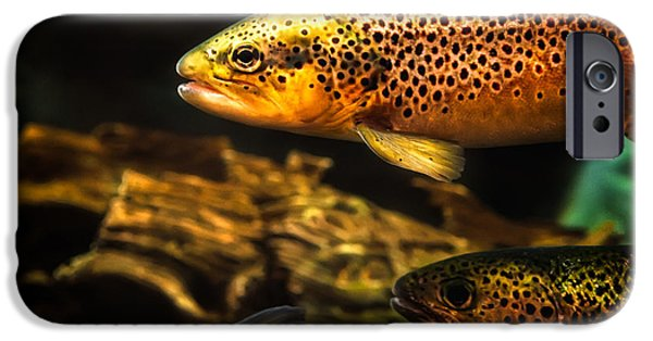 Fish Photographs iPhone Cases - Trout swiming in a River iPhone Case by Bob Orsillo