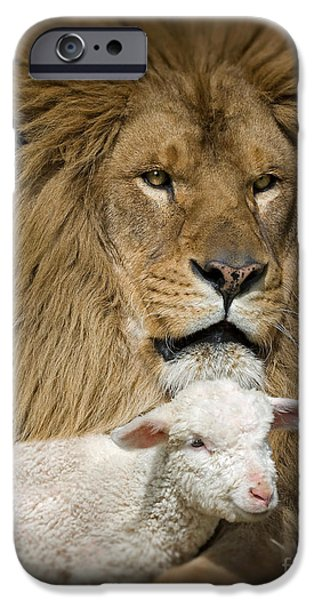 Animals Photographs iPhone Cases - True Companions iPhone Case by Wildlife Fine Art