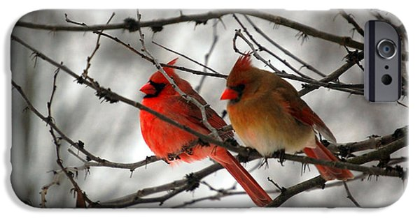 Birds iPhone Cases - True Love Cardinal iPhone Case by Peggy  Franz