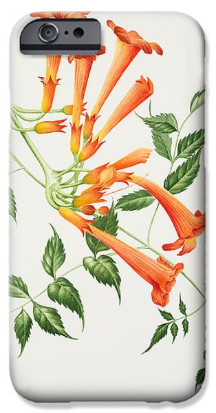 Trumpet Paintings iPhone Cases - Trumpet iPhone Case by Sally Crosthwaite