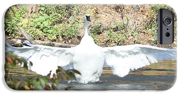 Swans... iPhone Cases - Trumpeter Swan iPhone Case by John Telfer