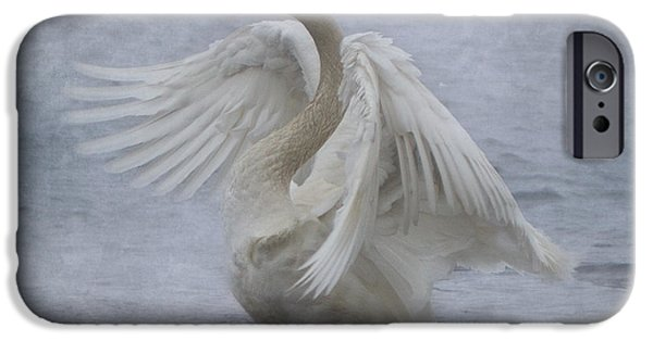 Mist iPhone Cases - Trumpeter Swan - Misty Display iPhone Case by Patti Deters