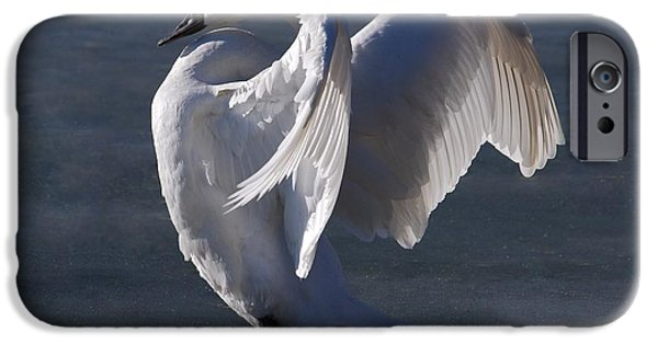 Zeus iPhone Cases - Trumpeter Swan - Zeus iPhone Case by Joy Bradley