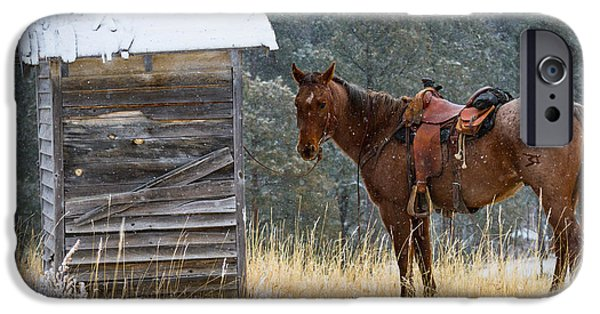 North America iPhone Cases - Trusty Horse  iPhone Case by Inge Johnsson