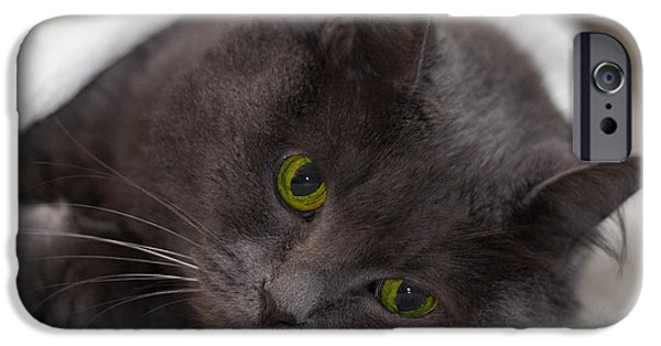 Gray Hair iPhone Cases - Tuckered Out iPhone Case by Joann Vitali