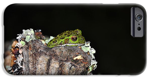 Cute Tree Images iPhone Cases - Tuckered Tree Frog iPhone Case by Al Powell Photography USA