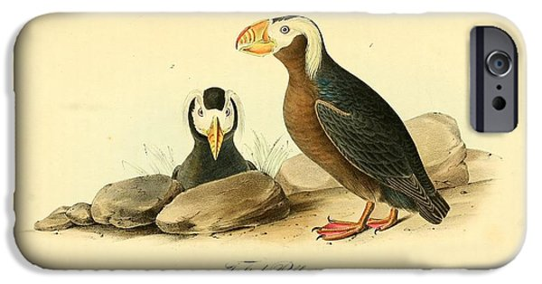 Botanical Drawings iPhone Cases - Tufted Puffins iPhone Case by John James Audubon