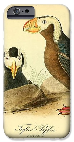 Tufted Puffins iPhone Case by John James Audubon