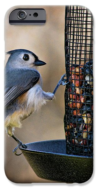 Tufted Titmouse iPhone Cases - Tufted Stance iPhone Case by Lana Trussell
