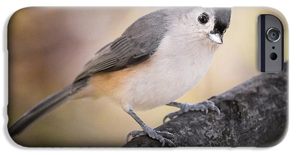 Titmouse iPhone Cases - Tufted Titmouse iPhone Case by Bill  Wakeley