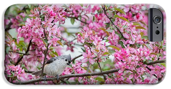 Titmouse iPhone Cases - Tufted Titmouse In A Pear Tree iPhone Case by Bill  Wakeley